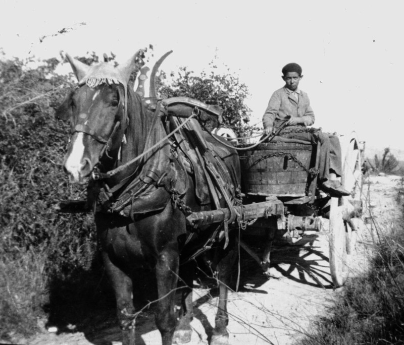 Laurent Tortosa pendant les vendanges 1925