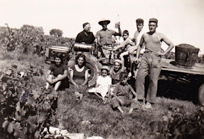Vendanges chez Henri Bayle (avec la bouteille), debout à droite Marcel Garrigues -1960