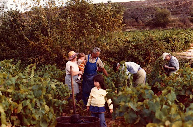 VENDANGES 1978