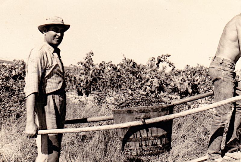 1965 : Mr Guillermo sort une comporte avec les sémailés