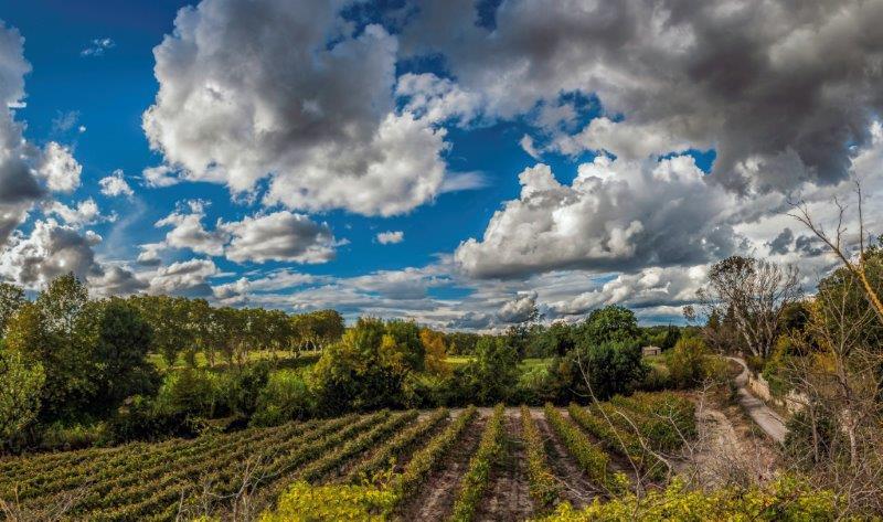 panorama vignes à Montbazin